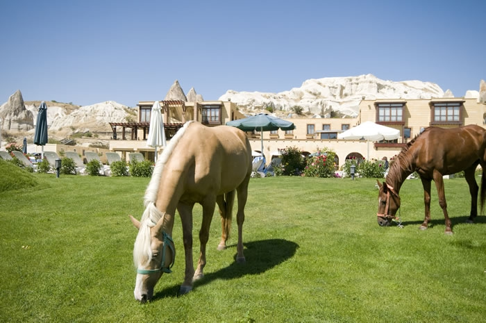 Tourist Hotel & Resort Cappadocia4473
